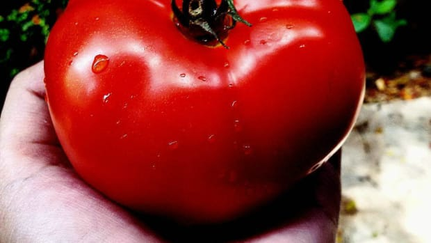 Man Finds Strawberry-Like Core In Tomato (Photos) Promo Image