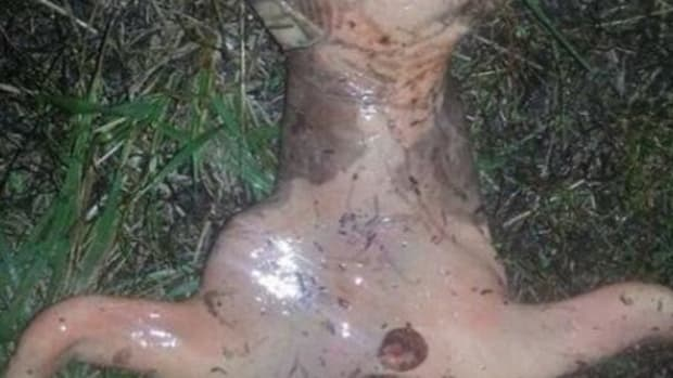 Woman Notices Something In Back Yard, Makes Mysterious Discovery (Photos) Promo Image