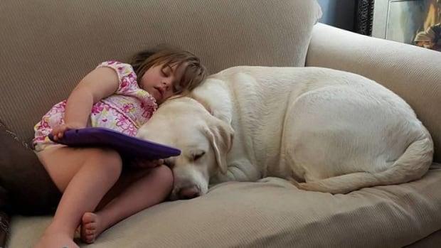Alert Dog Saves Diabetic Girl Five Miles Away (Video) Promo Image