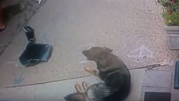 Burglars May Have Saved Dog's Life (Video) Promo Image