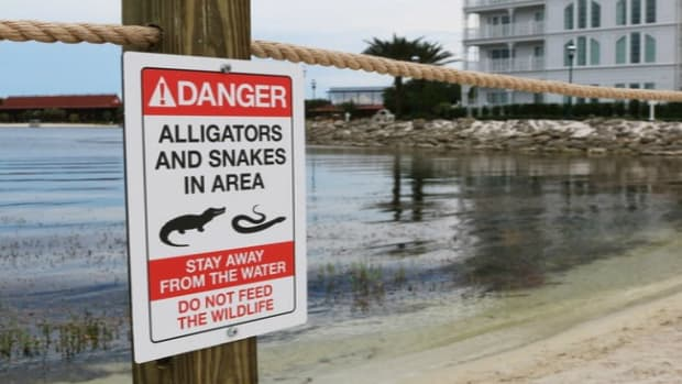 Father: Two Alligators Involved In Deadly Disney Attack Promo Image