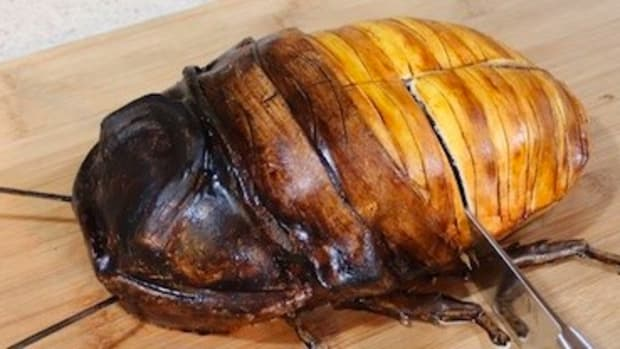 Man Cuts Open Giant Cockroach, What's Inside Is Shocking Promo Image