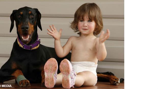 Dog Saves Toddler From Deadly Snake, Gets Bit Promo Image