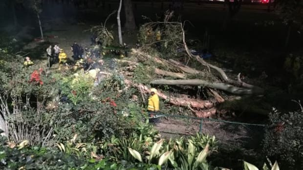 Tree Collapses At Wedding Party, Bride's Mother Dies (Photos) Promo Image