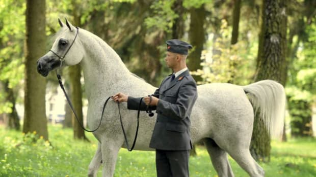 Arabian Mare Wows Horse Lovers (Video) Promo Image