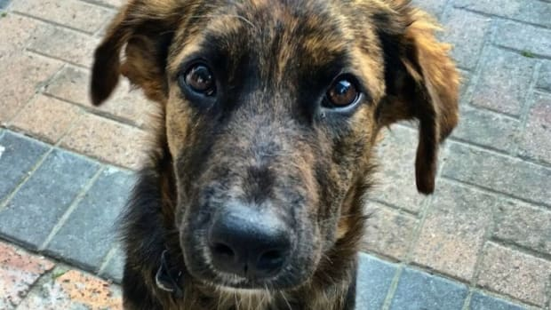 Puppy Almost Put To Death After Refusing To Play (Video) Promo Image