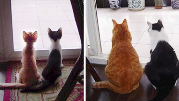 These Timelapse Cat Pictures Will Make You Smile (Photos) Promo Image