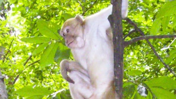 Monkey Adopts Stray Puppy (Video) Promo Image