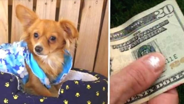 Owner Wouldn't Pay Shelter $20 For His Dog (Video) Promo Image