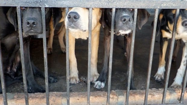 Millionaire Rescues Thousands Of Dogs (Photos) Promo Image