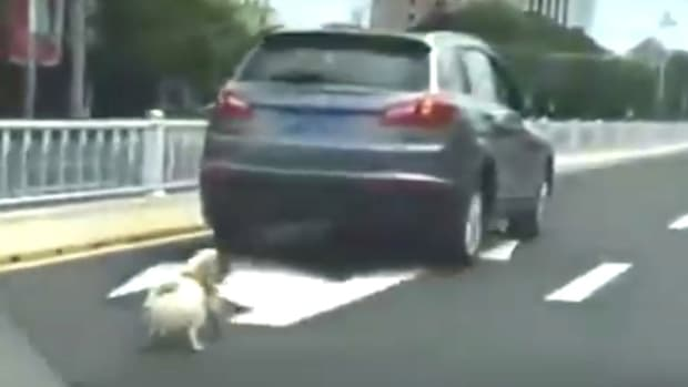 Chinese Driver Drags Dog To Its Death (Video) Promo Image