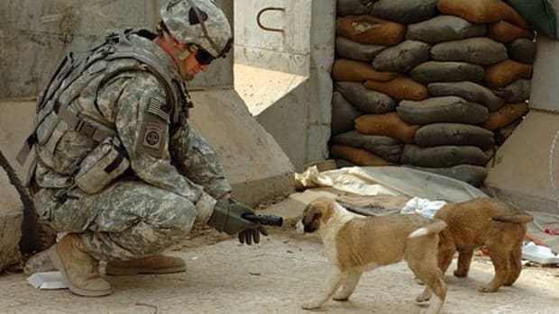 Family Of Fallen Soldier Finds Solace In A Dog He Met (Photos) Promo Image