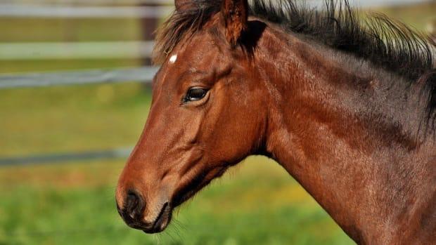 Man Admits To Molesting Horse Promo Image