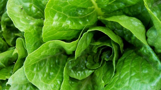 Consumer Advocacy Groups Warn To Avoid Romaine Lettuce Promo Image