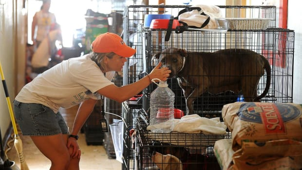Animal Rescuers Get To Work In Puerto Rico After Maria (Photos) Promo Image