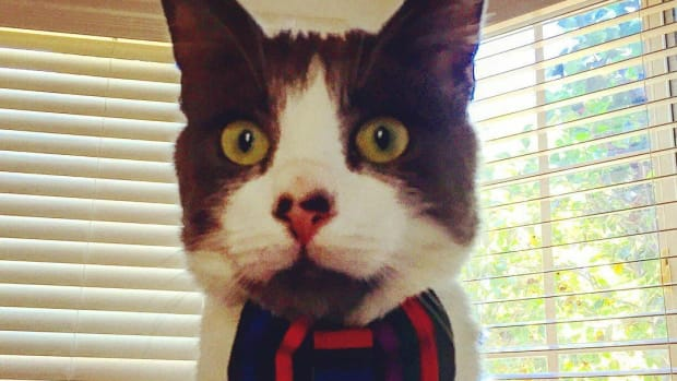 15 Reasons To Follow A Cat Named Marty On Instagram Promo Image