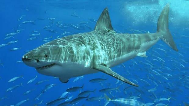 Petition: Punish Men Who Dragged Shark (Video) Promo Image