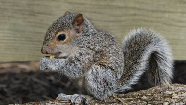 Family Develops Special Bond With Squirrel (Photos) Promo Image
