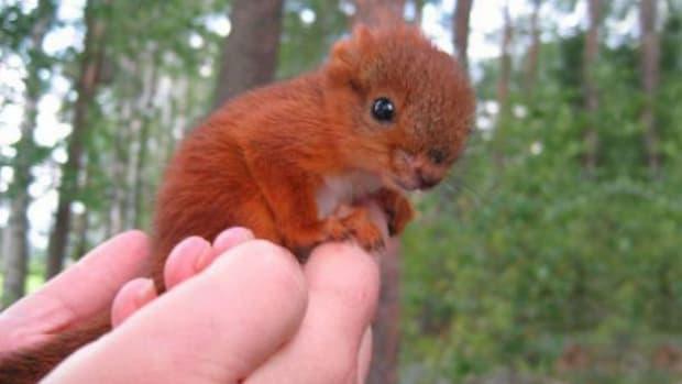 arttusquirrel1_featured.jpg