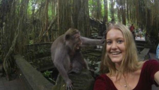monkeyselfie_featured.jpg