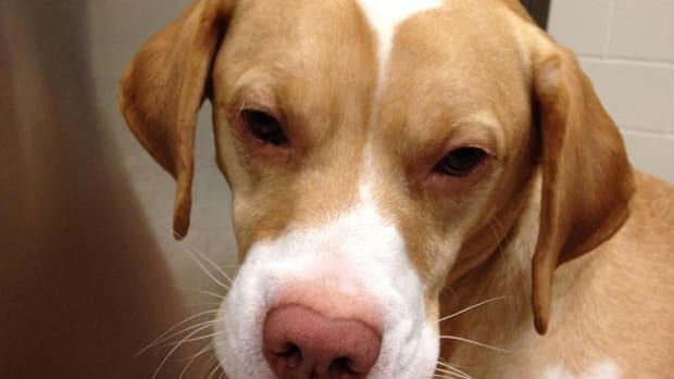 puppy_featured.jpg
