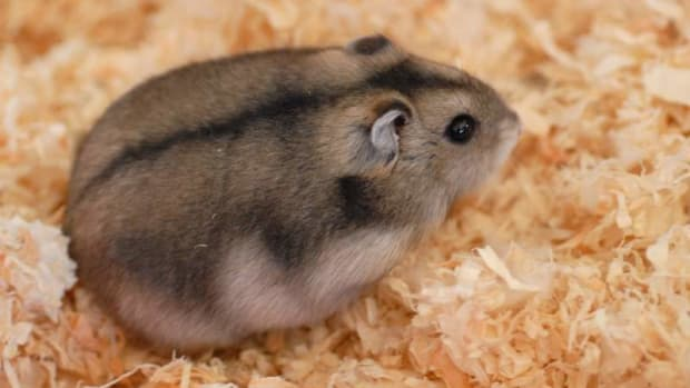 hamster1_featured.jpg