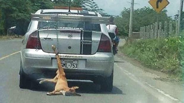 Dead Dog.