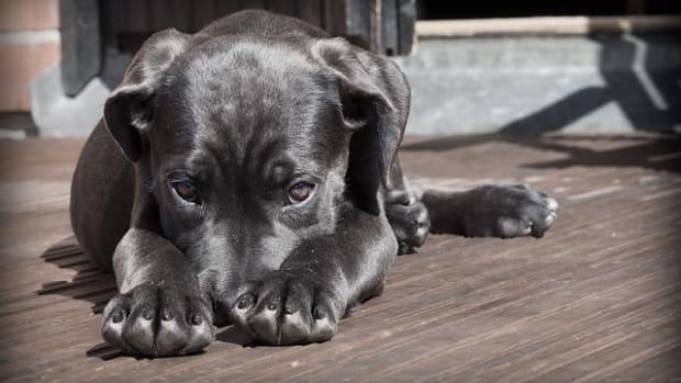dog_featured_0.jpg