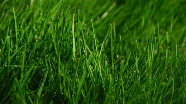 grass_featured.jpg