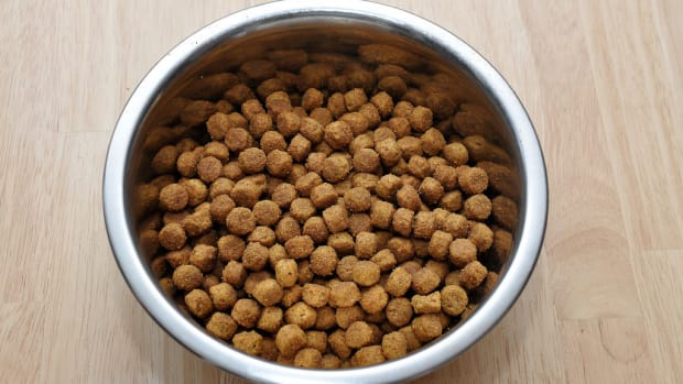 Dog Food Recalled For Disturbing Reason Promo Image