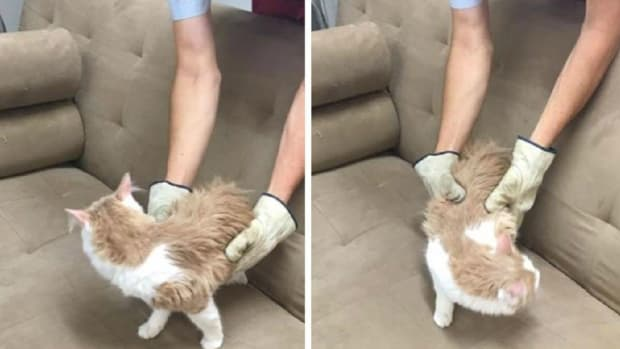 Cat Found Inside Donated Couch Promo Image