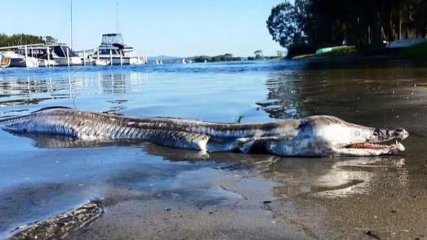 Unusual eel