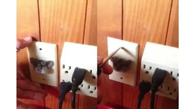 Man Discovers Rat Stuck In Wall Outlet (Video) Promo Image