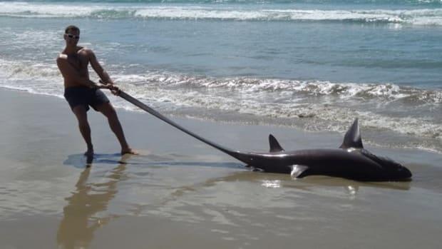 New Zealand Tourist Finds Unusual Shark On Beach Promo Image