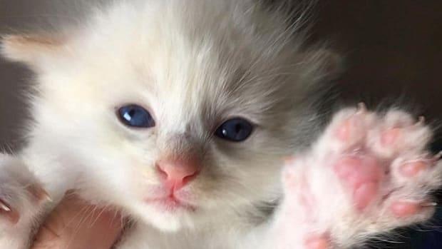 Rescued Kitten.
