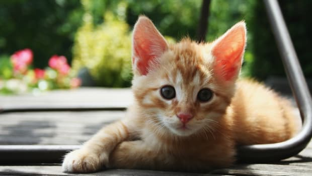 kittens.jpeg