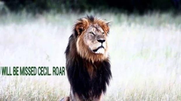 Cecil.jpg