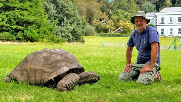 Jonathan the Tortoise