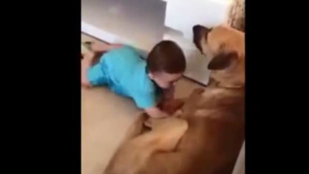 Parents Allow Young Baby To Play Around With Dog, He Pays The Price (Video) Promo Image