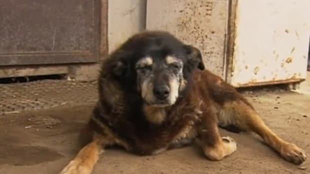 Dog Touted As Oldest In The World Dies Promo Image
