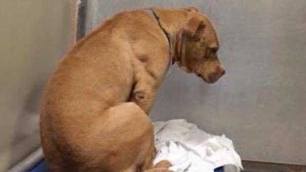 Shelter Dog's Sad Story Goes Viral (Photos) Promo Image