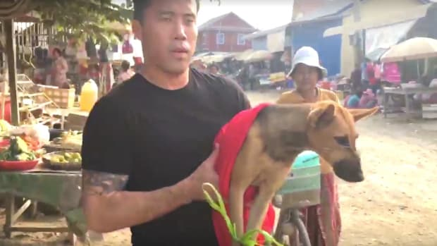 Man Rescues Dogs From Asian Dog Meat Industry (Video) Promo Image