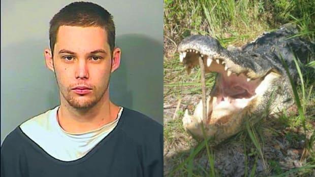 Left: Matthew Riggins, Right: alligator