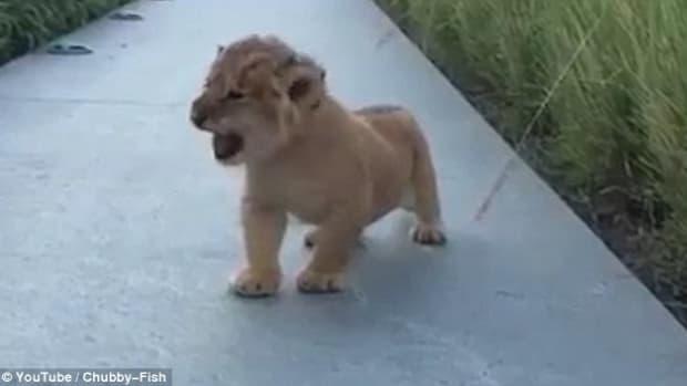 lioncub1.jpg