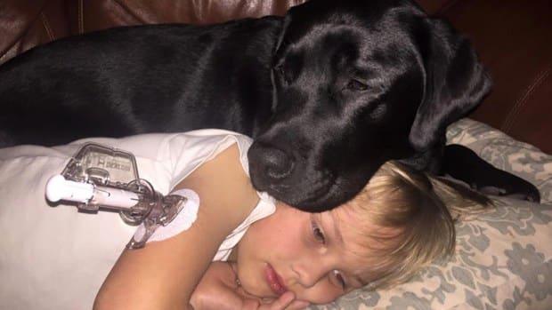 Dog Saves Boy With Diabetes' Life (Photos) Promo Image