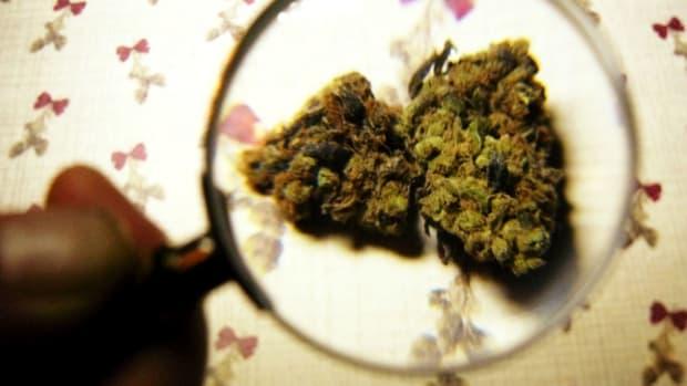 Study: Marijuana Use Not Linked To Health Problems Promo Image