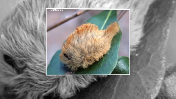 caterpillarstung1.jpg