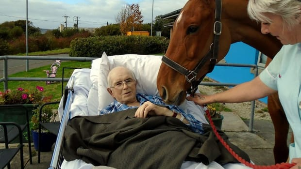 dying cancer patient frank keat visits with his beloved horse a final time