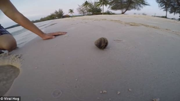 Two Men Pry Open Shell They Found On Beach, Get A Big Surprise (Video)  Promo Image