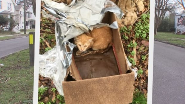 The Kitten Rescued By Lisa Suhay